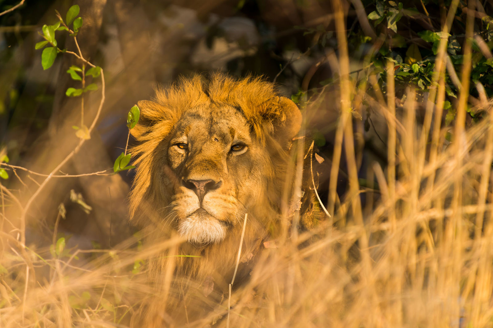Full Kafue Experience