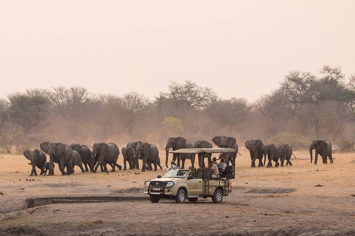 Top 5 Safari Destinations In Zimbabwe