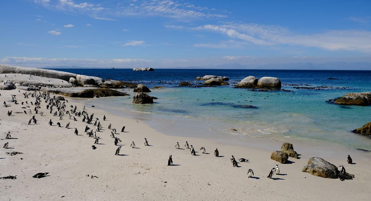 South african Safari Holidays