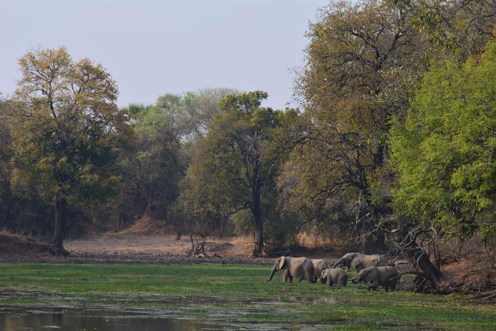 Beach And Bush Safari